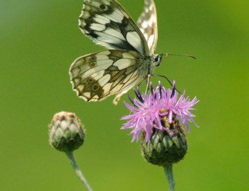 Bezaubernde Welt der Schmetterlinge