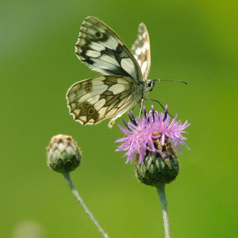 Butterfly Foto artemedia